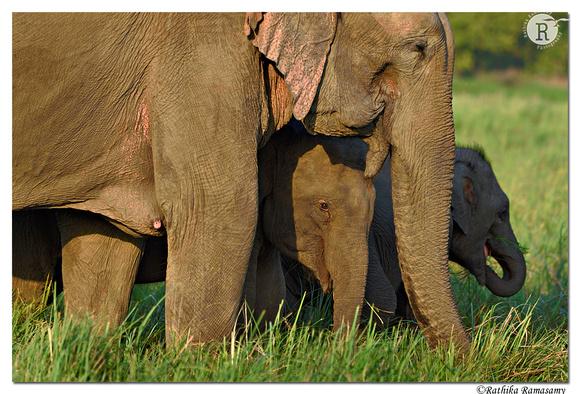 Baby elephant_D4S29081