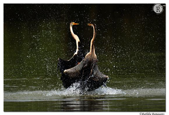 Water Dance_D4S8884